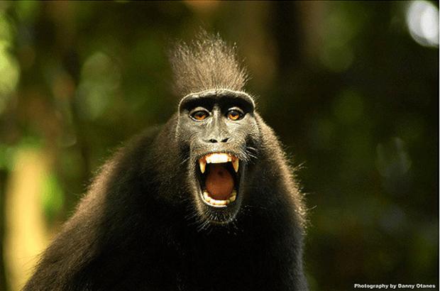salon_collage_award_winning_hair_salon_toronto_monkey